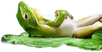 frog-relax